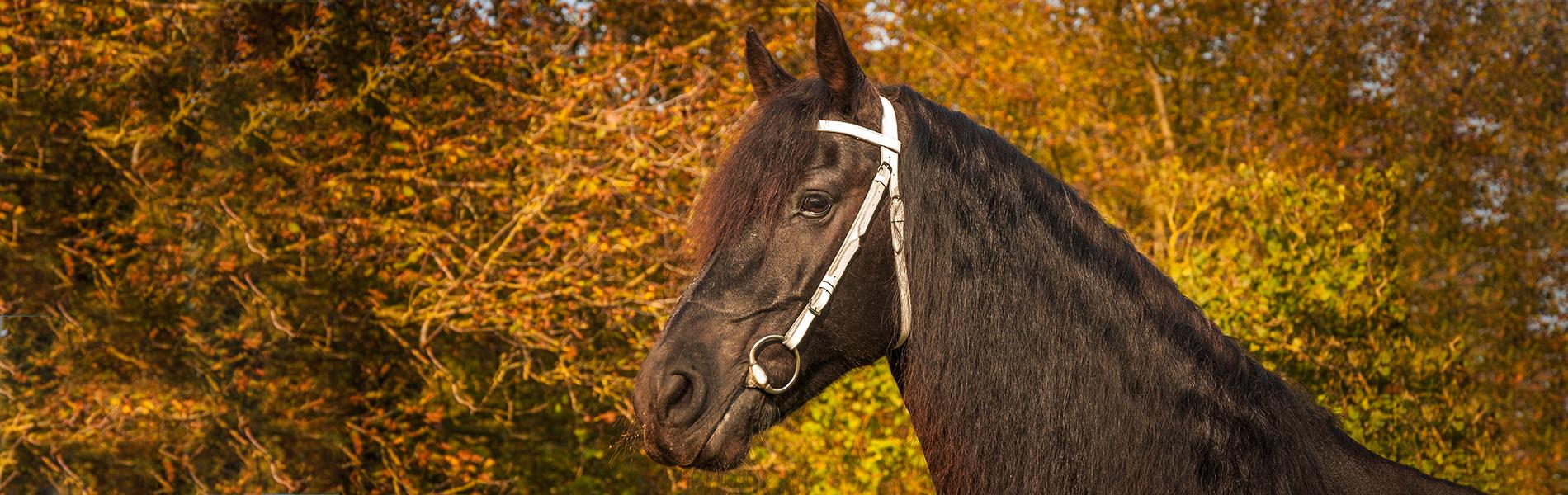 Online inschrijven paardenkliniek
